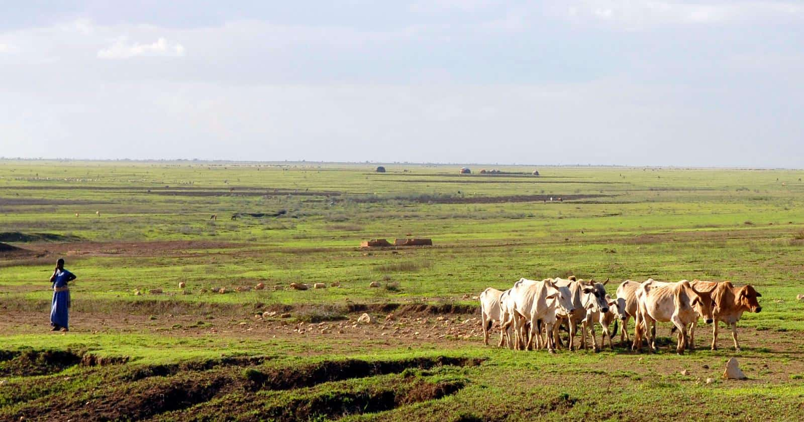 US businessmen are close to exploiting Ethiopia's oil plans in a multibillion-dollar scheme